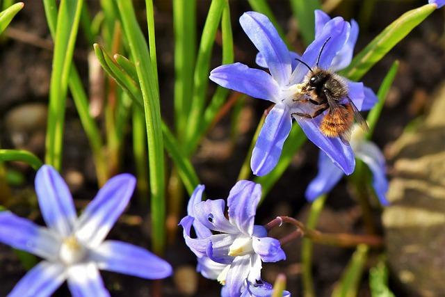 Flower, Blossom, Bloom, Hummel, Nectar, Sprinkle