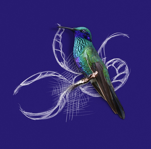 Hummingbird, Bird, Figure, Nature