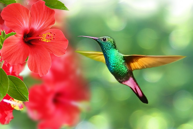 Hummingbird, Bird, Hibiscus, Nature, Exotic, Tropical