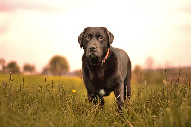 Dog, Nature, Hundeportrait