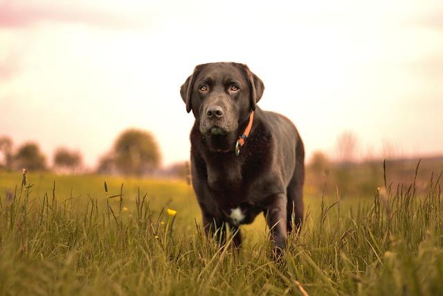 Dog, Nature, Hundeportrait