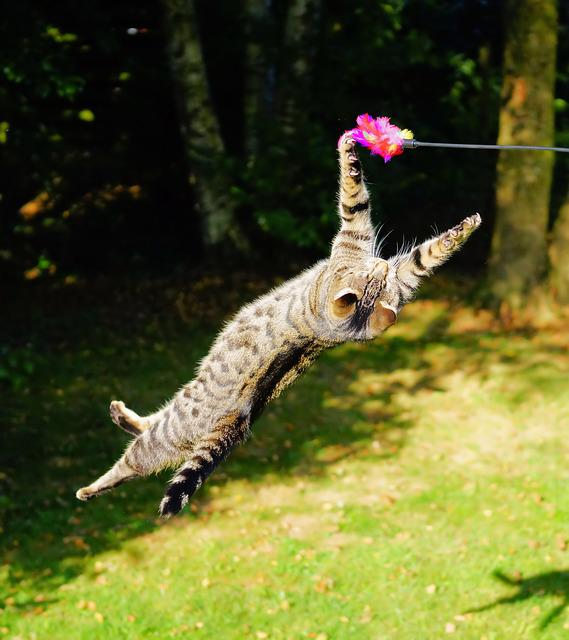 Cat, Flying Cat, Play, Jump, Hunting Drive, Fun, Sport