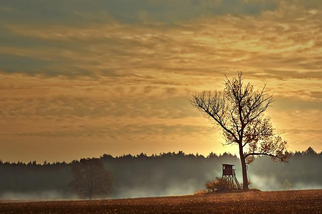 Perch, Delight, Hunting Seat, Hunting, Landscape, Tree