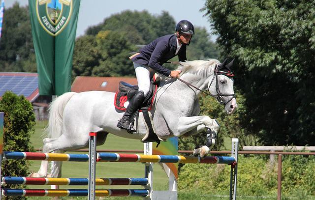 Sport, Competition, Hurry, Variety, Horse, Human