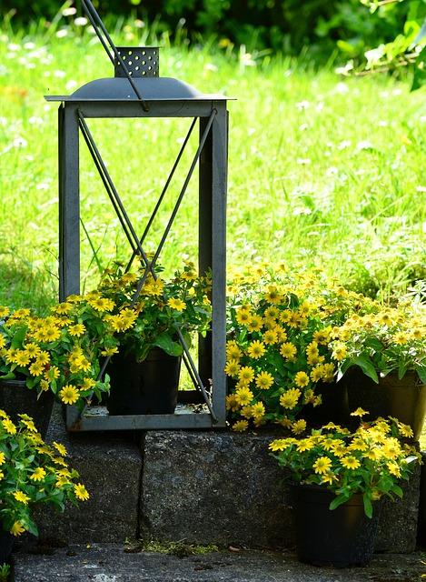 Garden Decoration, Garden, Hussar Button, Potted Plant