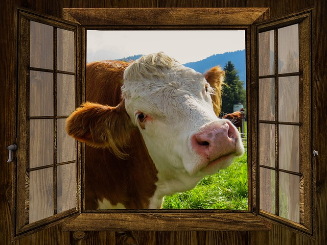 Window, Cow, Alm, Hut, Meadow, Pasture, Farm, Curiosity