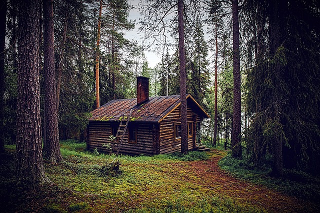 Hut, Forest, Seefeld, Log Cabin, Nature, Forest Lodge