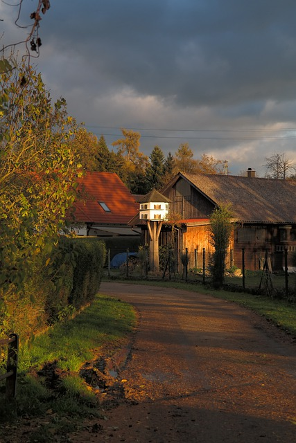 Aviary, Pigeon House, Feeding, Bird Feeding, Hut