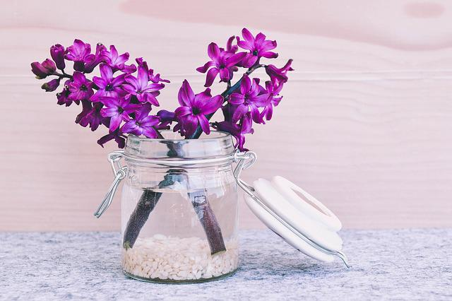 Hyacinth, Flower, Blossom, Bloom, Pink, Fragrant Flower