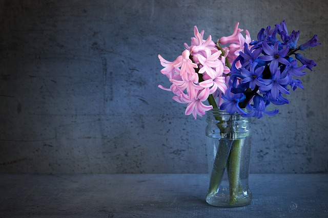 Hyacinth, Flowers, Spring Flower, Close, Glass