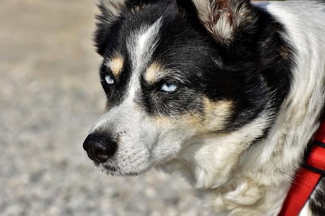 Hybrid, Dog, Small Dog, Pet, Animal, Head, Dog Head