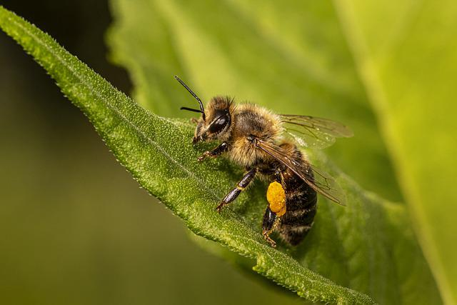 Bee, Insect, Winged Insect, Wings, Nature, Hymenoptera