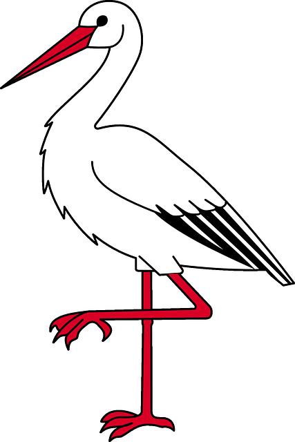 Ibis, Bird, Long, Legged, Threskiornithidae, Ibises