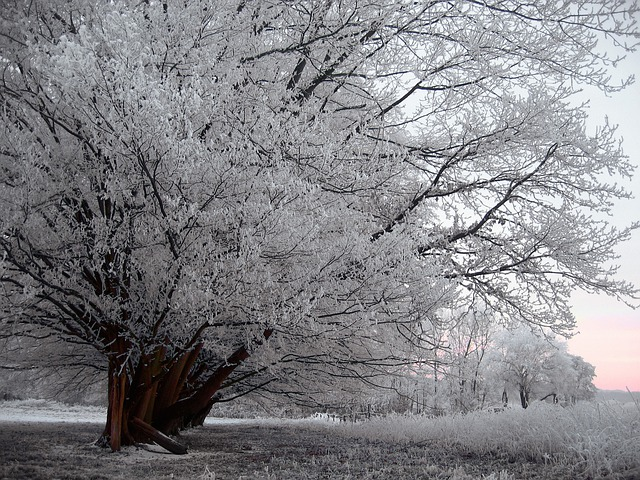 Ice, Hoarfrost, Cold, Snow, Winter, Meadow, Fence, Tree