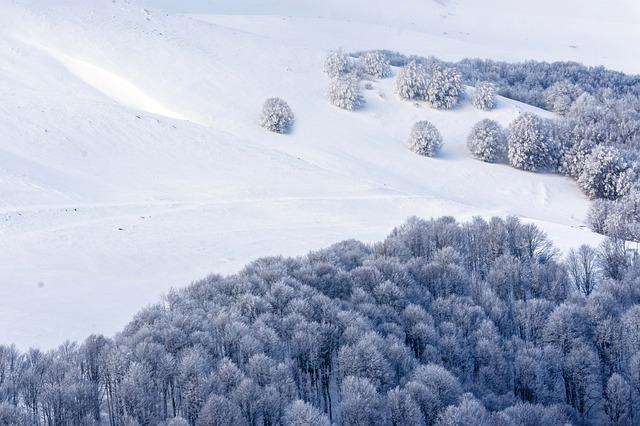 Snow, Cold, Trees, Christmas, Nature, Ice, Frost