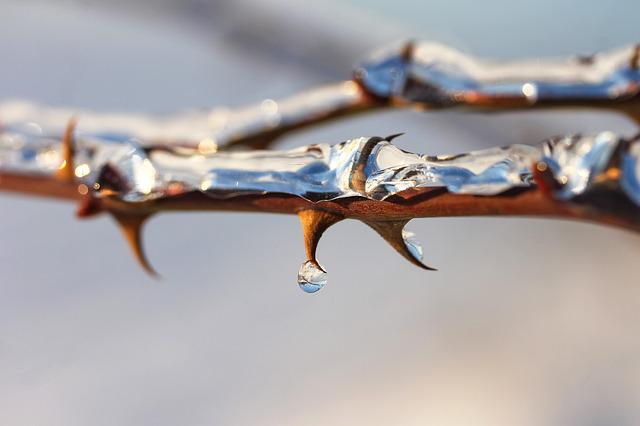 Thorn, Brian, Ice, Winter, Nature, Plant, Drop, Spike