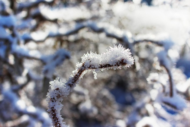 Winter, Ice, Frozen, Eiskristalle, Winter Magic
