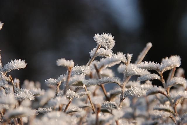 Winter, Frost, Freeze, Ice, Ripe, Nature, Cold, Plant