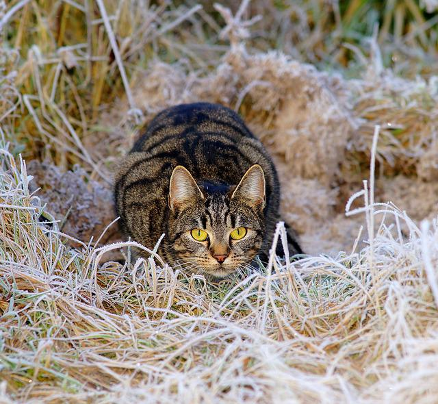 Cat, Hunter, Lurking, Winter, Pasture, Ice, Adidas