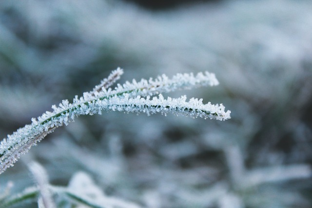 Frost, Nature, Cold, Frozen, Winter, Ice, Ripe