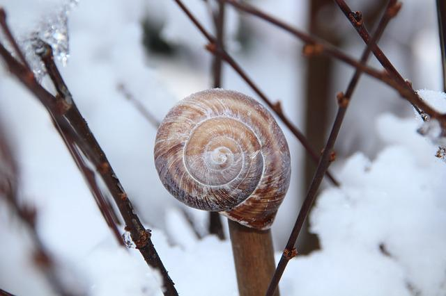 Winter, Rod, Snow, Ice, Snail, Shell, Branch, Close Up