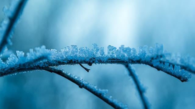 Ice, Eiskristalle, Frost, Winter, Branch, Frozen, Iced