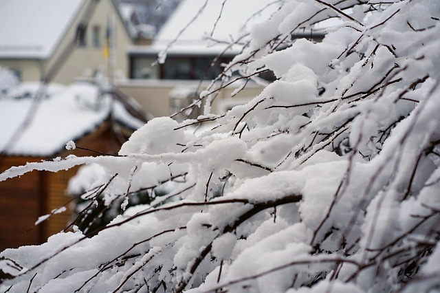 Winter, Snow, Tree, Cold, Nature, Frost, Branch, Iced