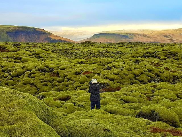 Lava Field, Moss Field, Iceland, Wonderland, Green Moss