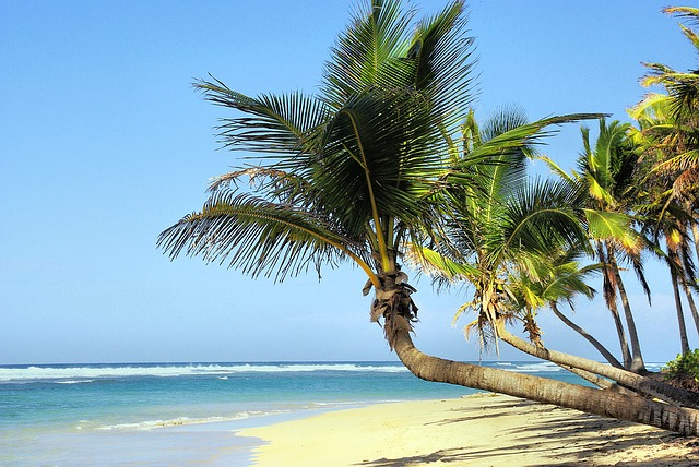 Cuba, Beach, Coconut Trees, Idleness, Holiday