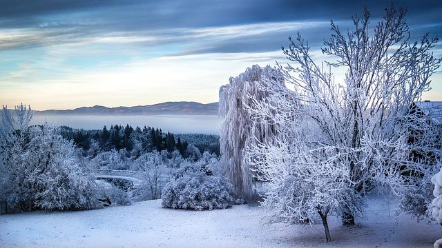 Tree, Fog, Landscape, Snow, Winter, Mysterious, Idyllic