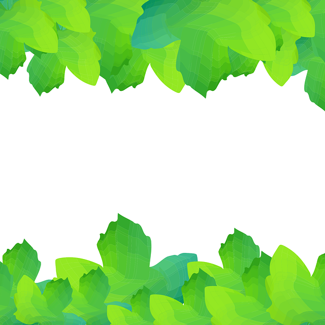 Leaves, Vector, Nature, Summer, Illustration, Plant