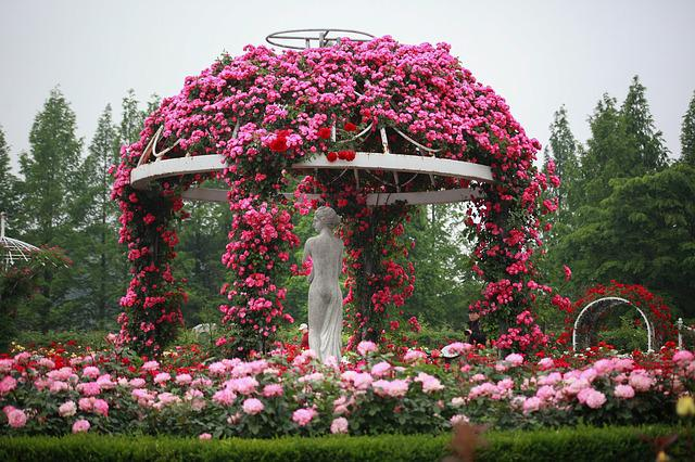 Flowers, Garden, Nature, Plants, Sculpture, Rose, Ilsan