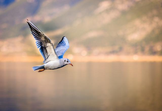 Bird, Seagull, I'm Flying, Marine Birds, Puffin, Birds