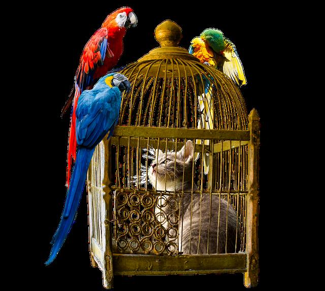 Animals, Bird, Cat, Parrot, Cage, Imprisoned, Freedom