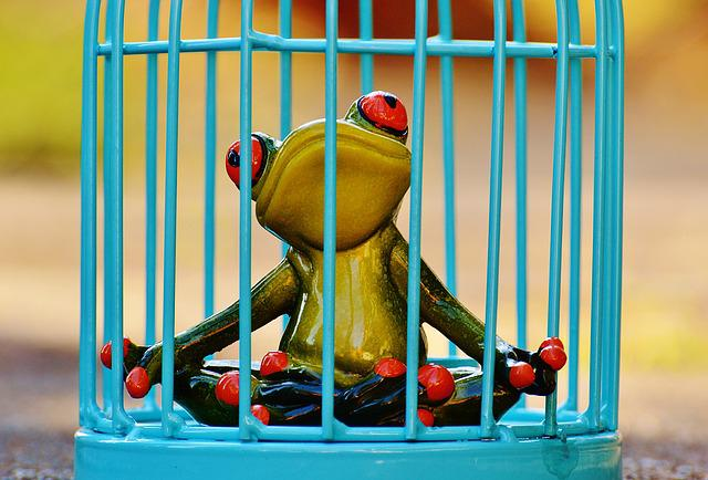 Frog, Cage, Imprisoned, Sad, Fig, Funny, Cute, Caught