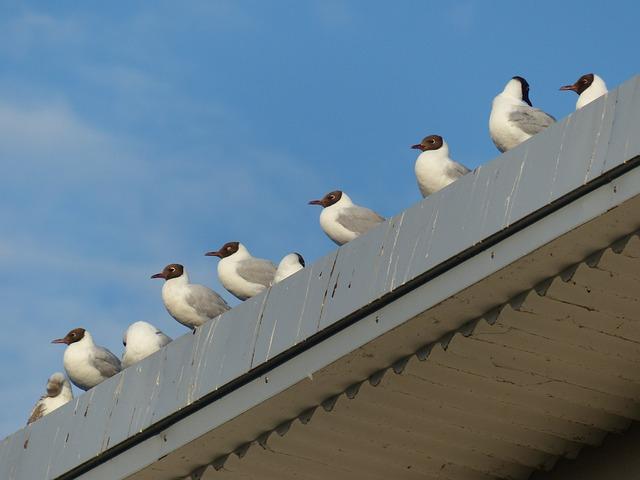 Gulls, Birds, In A Series, Sit, Black Headed Gulls