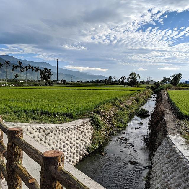 Taiwan, In Rice Field, Ikegami