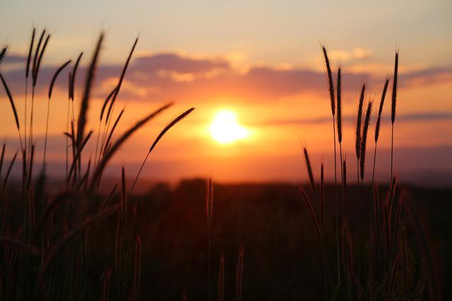 Sunset, Nature, In The Evening, Vegetation, Sky