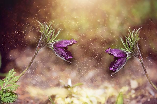 Anemone, Garden, In The Garden, Plant, Flower Garden