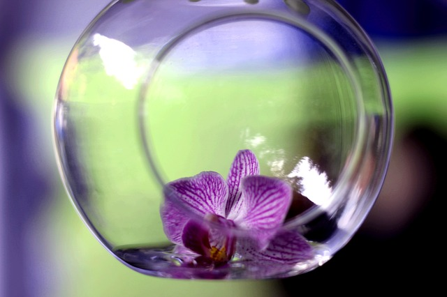 Orchid, Blossom, Bloom, In The Glass, Deco, Decoration