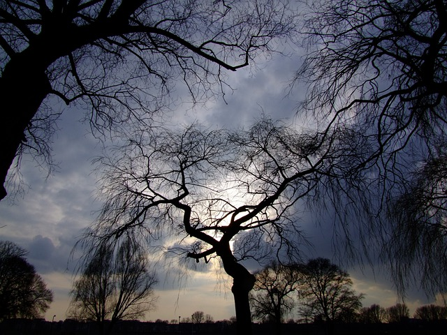Trees, Dramatic Sky, Backlighting, In The Lens