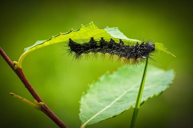 Caterpillar, Larva, Animal, Fauna, Nature, Hairy, Inch