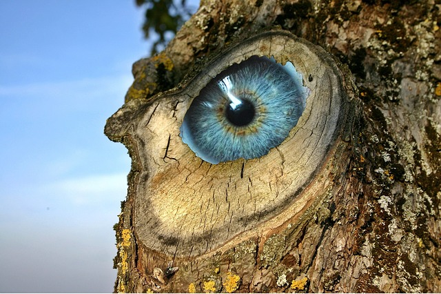 Eye, Log, Incidence, Unreal, Strange