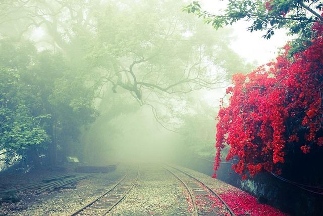 Alishan, Independence Hill, Landscape, Mist, Rail