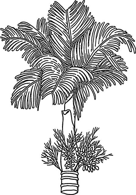 Tree, Arecanut, Betelnut, Nut, Areca, India, Palm