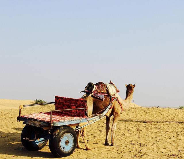 Camel, Desert, Horizon, India
