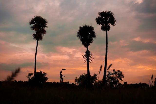 Palm, Man, India, Sunset, Farm