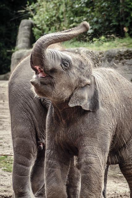 Elephant, Animal, Grey, Indian Elephant, Zoo