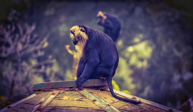 Monkey, Indian Monkey, Wildlife, Mammal