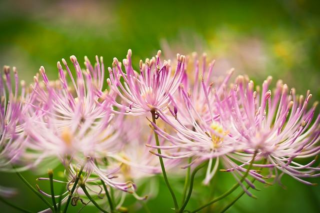 Indian Nettle, Flower, Blossom, Bloom, Plant, Nature